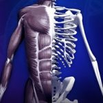 Discover Human Body - Anatomy and Physiology gratis